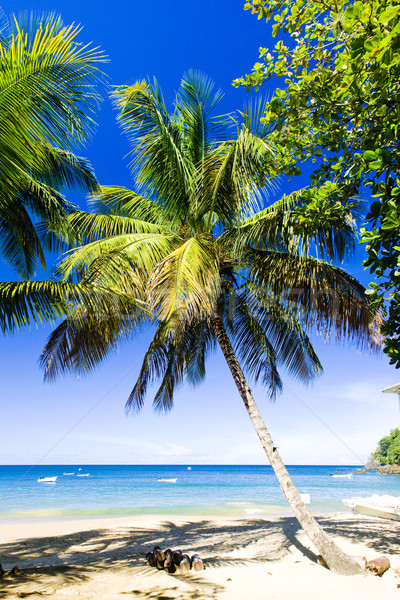 Castara Bay, Tobago Stock photo © phbcz