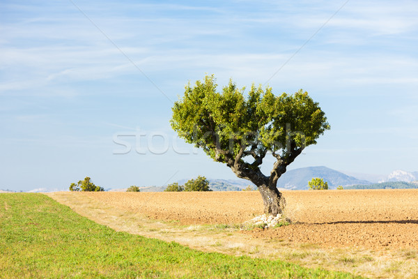 Campo árbol meseta Francia paisaje Europa Foto stock © phbcz