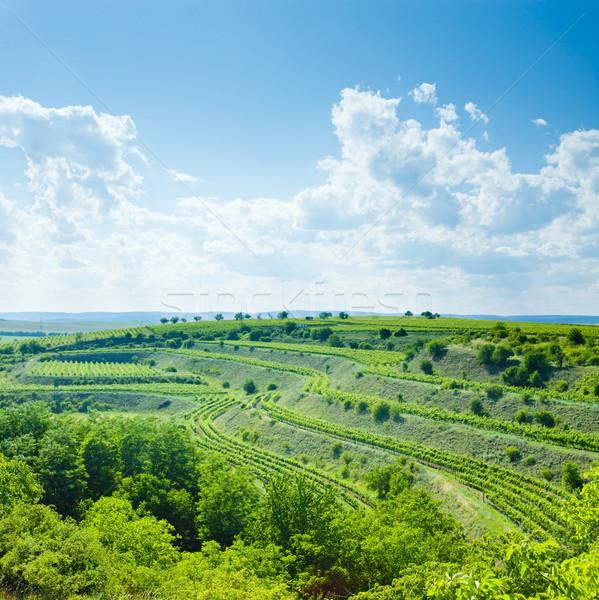 vineyard, Eko Hnizdo, Czech Republic Stock photo © phbcz