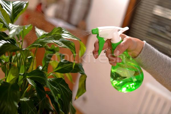 young woman watering houseplants Stock photo © philipimage