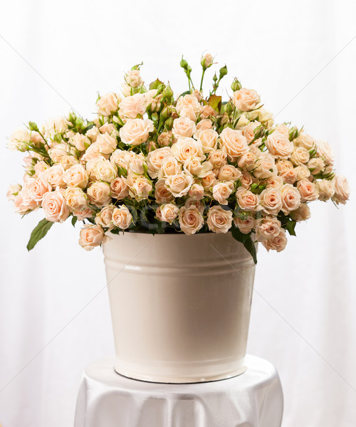 Kremowy róż wiadro tabeli kwiaty Zdjęcia stock © photobac