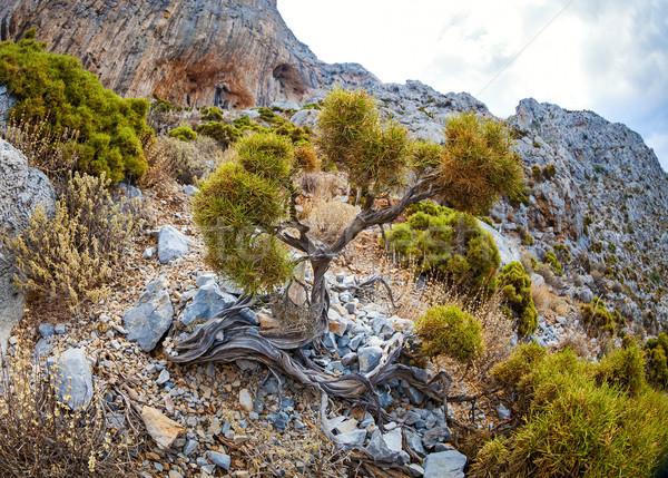 Vegetation on rocky slope in mountains Stock photo © photobac