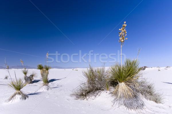 White Sands National Park Stock photo © photoblueice