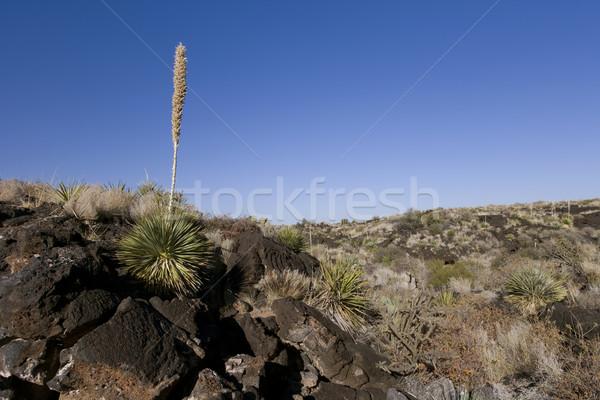 Beautiful desert scene framed in with a blue sky Stock photo © photoblueice