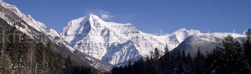 Munte frumos vedere zăpadă copaci Imagine de stoc © photoblueice