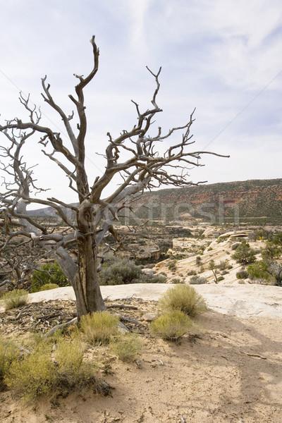Deşert scena Dead Tree Imagine de stoc © photoblueice