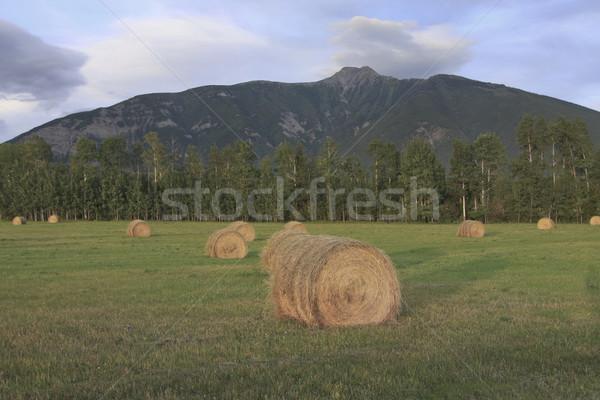 Hay field at dusk Stock photo © photoblueice