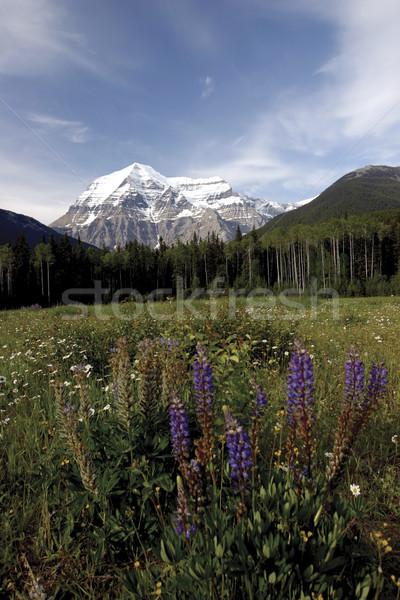 View montagna campo fiore primo piano fiori Foto d'archivio © photoblueice