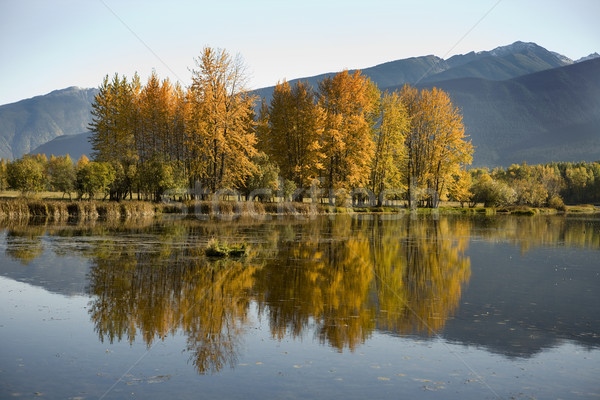 Autumn colors Stock photo © photoblueice