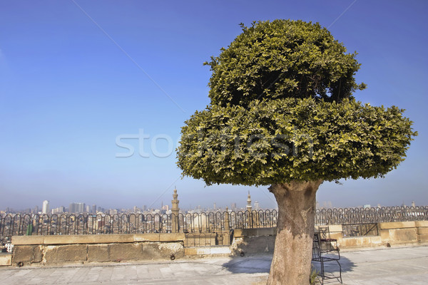 On top of the Citadel looking at Cairo Stock photo © photoblueice