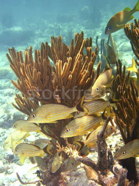 Albastru apă peşte Imagine de stoc © photoblueice