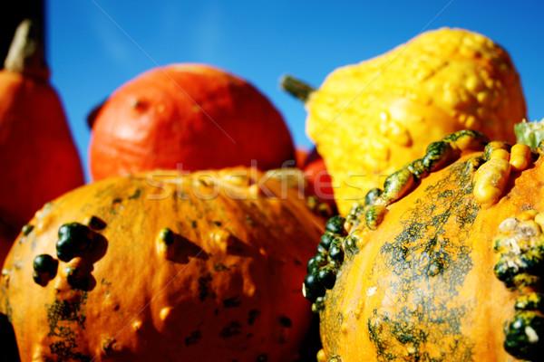 Huge beautiful pumpkins Stock photo © photochecker