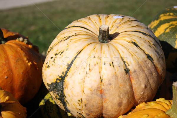 Fresh pumpkins Stock photo © photochecker
