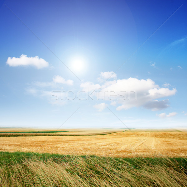 Landscape in the summer Stock photo © photochecker
