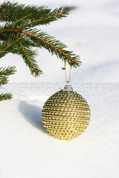 christmas tree Stock photo © photochecker