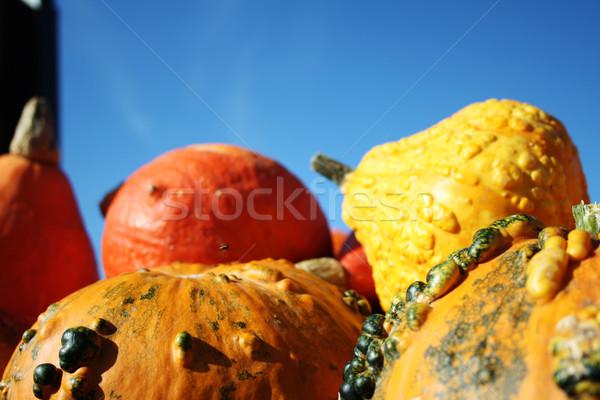 Groß gesunden Kürbisse ziemlich unterschiedlich Verkauf Stock foto © photochecker