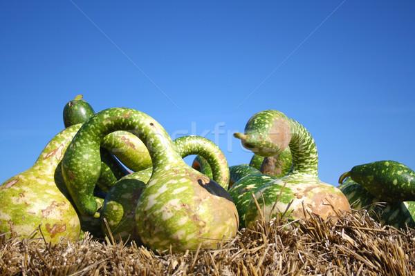 Grünen Kürbisse ziemlich unterschiedlich Verkauf Obst Stock foto © photochecker