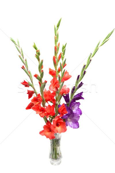 bouquet of colored gladioli isolated on white Stock photo © Photocrea