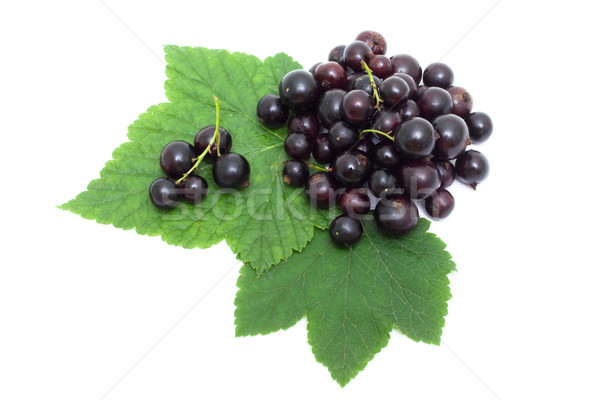 Stock photo: Blackcurrant isolated on white
