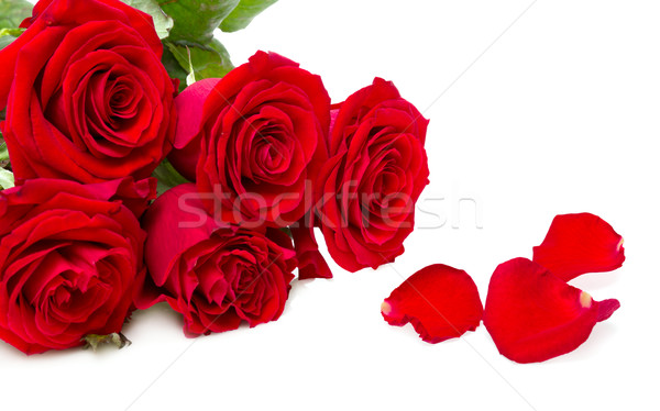 red roses isolated on a white background Stock photo © Photocrea