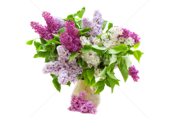 colorful bouquet of lilacs in a vase isolated on white Stock photo © Photocrea