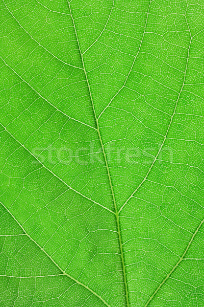 texture of green leaf Stock photo © Photocrea