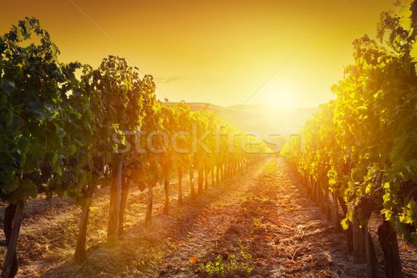 畑 風景 トスカーナ イタリア ワイン ファーム ストックフォト © photocreo
