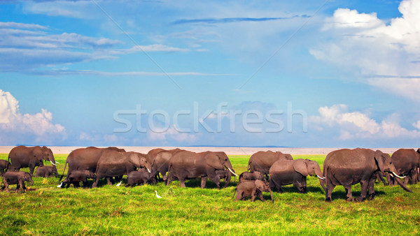 Elephants herd on savanna. Safari in Amboseli, Kenya, Africa Stock photo © photocreo