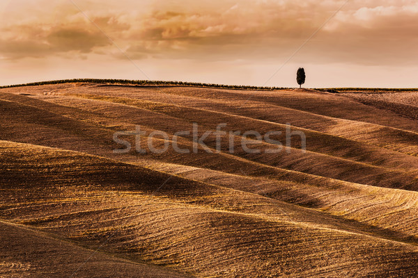 Tuscany fields autumn landscape, Italy. Harvest season Stock photo © photocreo