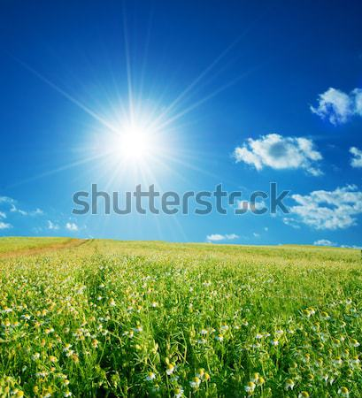 Spring meadow under sunny blue sky Stock photo © photocreo