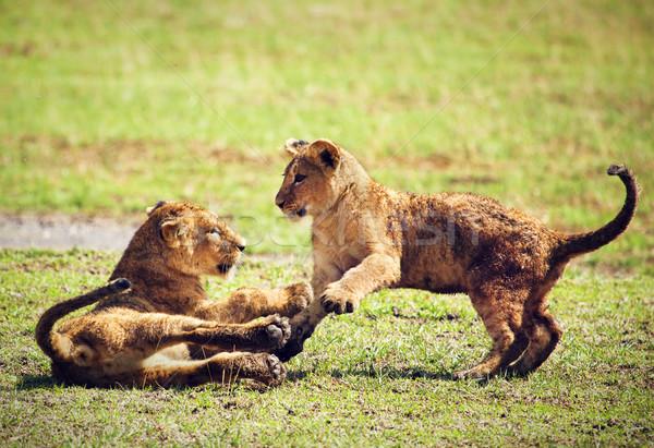 ストックフォト: 小 · ライオン · 演奏 · タンザニア · アフリカ · サバンナ