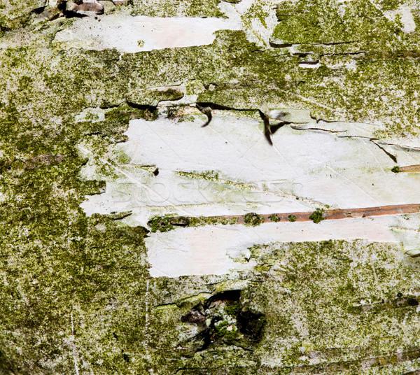 Boom schors macro ruimte hout foto Stockfoto © photocreo