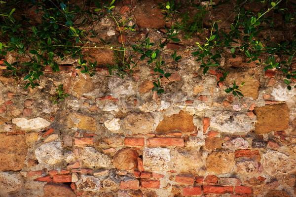 Antica mattone muro di pietra ivy vintage grunge Foto d'archivio © photocreo