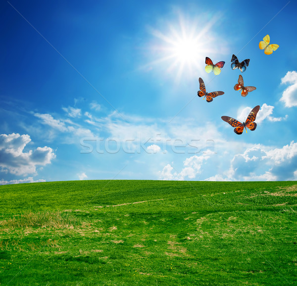 Green perfect field, a butterfly group flying Stock photo © photocreo