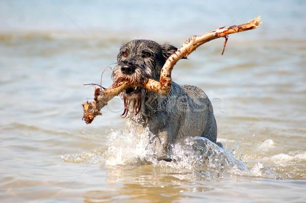 Active dog Stock photo © photocreo