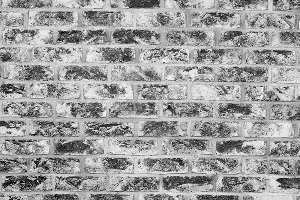 Old grunge brick wall background. Black and white Stock photo © photocreo