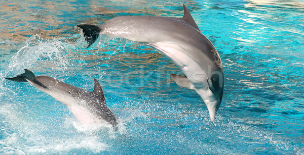 Dolphins show Stock photo © photocreo