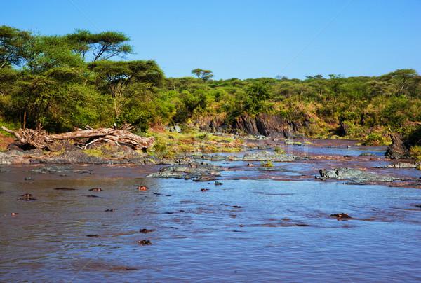 Víziló víziló folyó Serengeti Tanzánia Afrika Stock fotó © photocreo