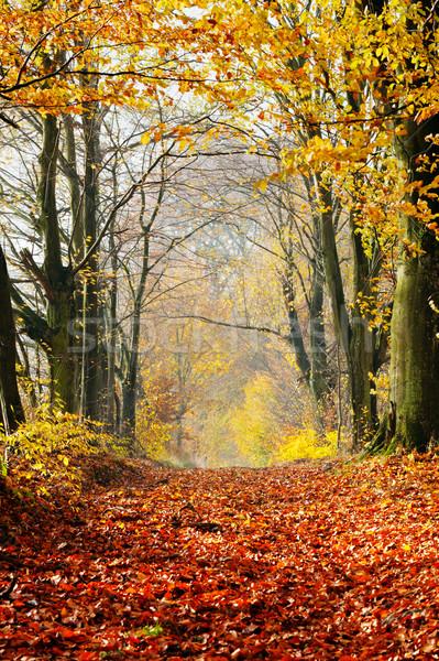 Zdjęcia stock: Jesienią · spadek · lasu · ścieżka · czerwony · pozostawia