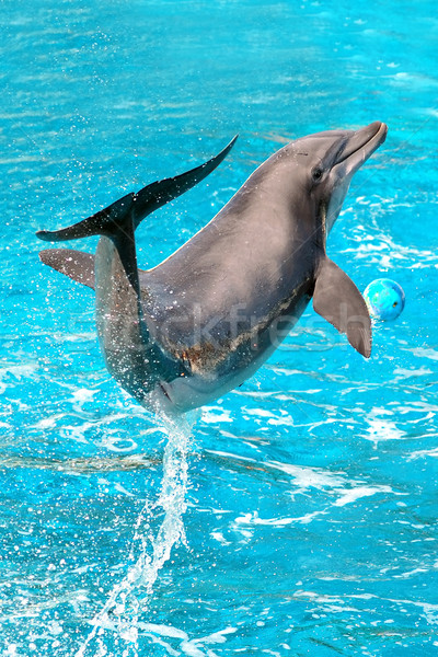 Dolphin plays Stock photo © photocreo