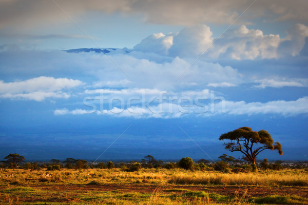Mount Kilimanjaro. Savanna in Amboseli, Kenya Stock photo © photocreo