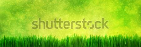 Fresh green grass panorama on natural blur nature background Stock photo © photocreo
