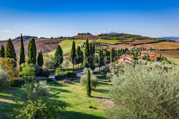 Tuscany countryside landscape with cypress trees, farms and green fields, Italy. Stock photo © photocreo