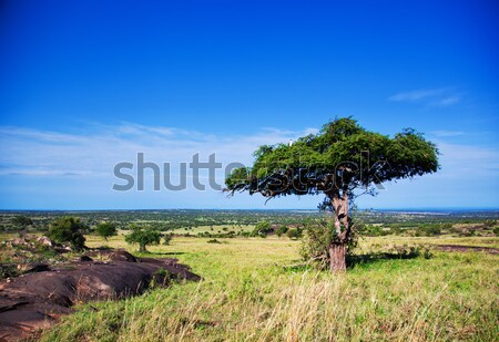 Savanna landscape in Africa, Serengeti, Tanzania Stock photo © photocreo