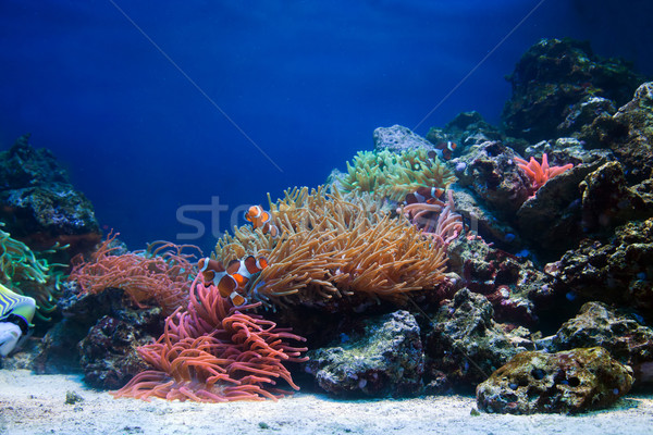 Underwater life, Fish, coral reef Stock photo © photocreo