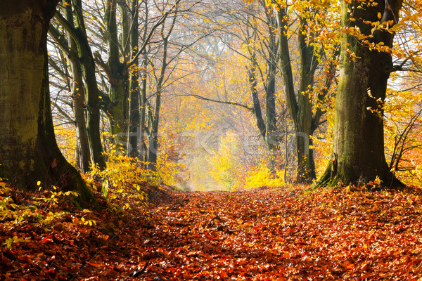 Autumn, fall forest. Path of red leaves towards light. Stock photo © photocreo