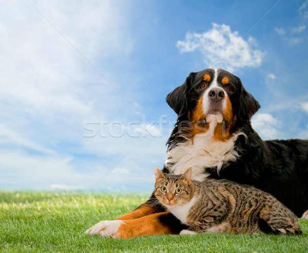 Dog and cat together Stock photo © photocreo