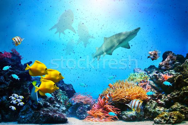 Vízalatti jelenet korallzátony hal csoportok cápák Stock fotó © photocreo