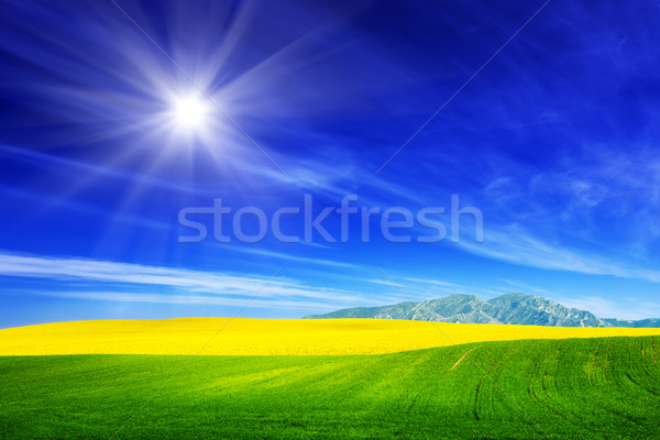 Stock photo: Spring field of green grass and yellow flowers, rape. Blue sunny sky