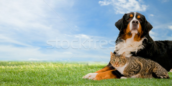Stock photo: Dog and cat together